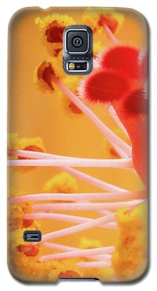 Hibiscus-2 Galaxy S5 Case