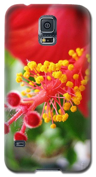 Hibiscus #3 Galaxy S5 Case