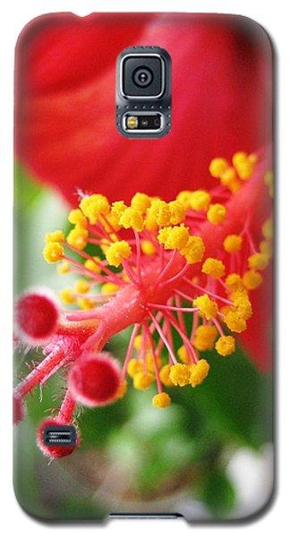 Hibiscus #3 Galaxy S5 Case