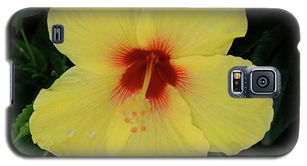 Sun Lover Hibiscus Galaxy S5 Case