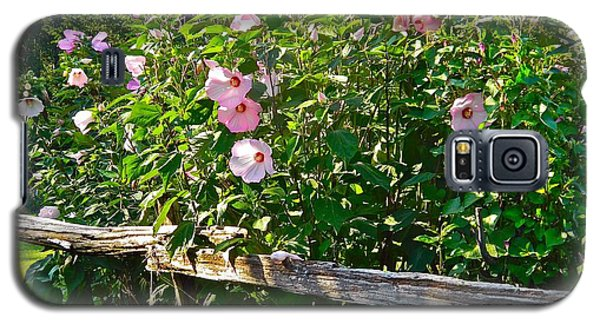 Hibiscus Hedge Galaxy S5 Case by Randy Rosenberger