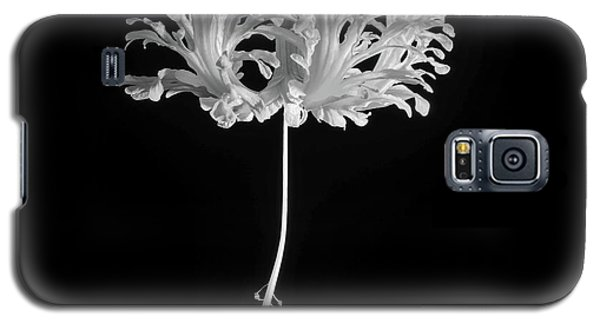 Hibiscus Schizopetalus Against A Black Background In Black And White Galaxy S5 Case