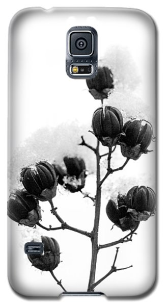 Hickory Tree In Winter Galaxy S5 Case