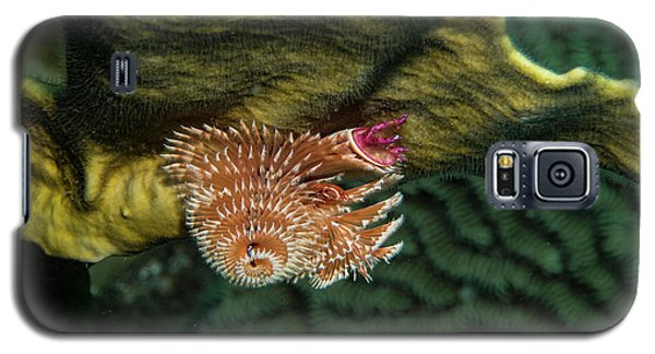 Galaxy S5 Case featuring the photograph Hidden Christmastree Worm by Jean Noren