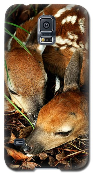 Hiding Twin Whitetail Fawns Galaxy S5 Case