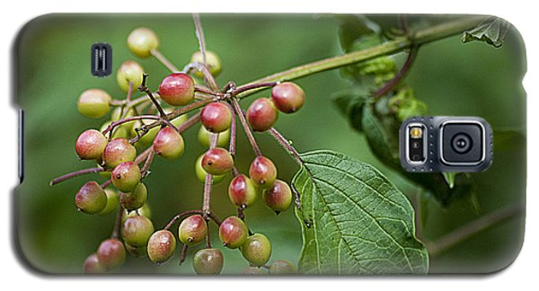 Galaxy S5 Case featuring the photograph High Bush Cranberry 20120703_106a by Tina Hopkins