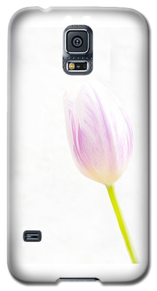 High Key Tulip Galaxy S5 Case