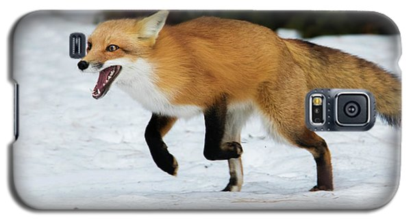 Galaxy S5 Case featuring the photograph High Speed Fox by Mircea Costina Photography