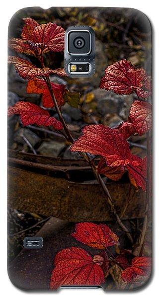 Highbush Cranberry Leaves Galaxy S5 Case