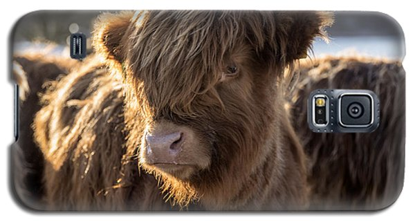 Highland Baby Coo Galaxy S5 Case by Jeremy Lavender Photography