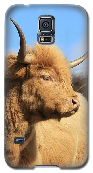 Highland Cattle Galaxy S5 Case