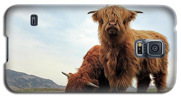 Highland Cow Calves Galaxy S5 Case