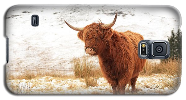 Highland Cow Galaxy S5 Case by Grant Glendinning