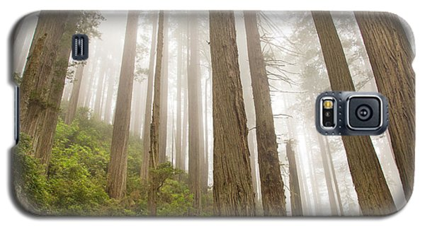 Hike Through The Redwoods Galaxy S5 Case