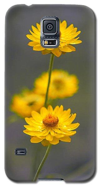 Hillflowers Galaxy S5 Case by Az Jackson