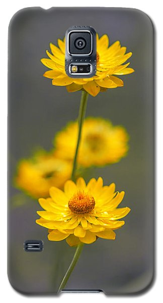 Hillflowers Galaxy S5 Case