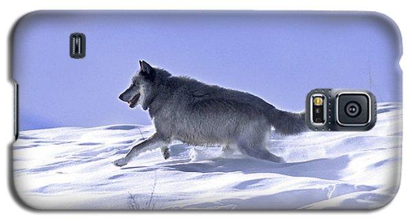 His Majesty Druid Wolf 21m Galaxy S5 Case