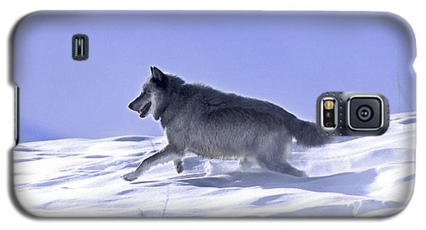 His Majesty Druid Wolf 21m Galaxy S5 Case