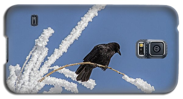 Hoarfrost And The Crow Galaxy S5 Case by Alana Thrower