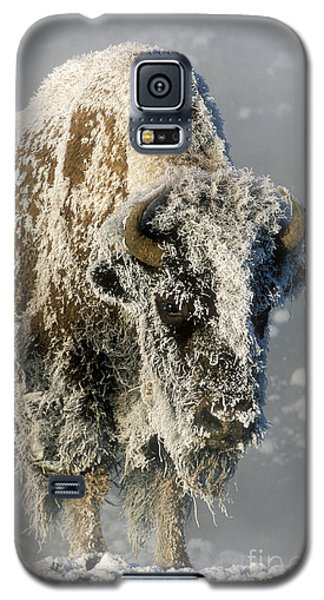 Hoarfrosted Bison In Yellowstone Galaxy S5 Case