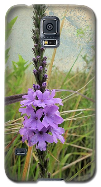 Hoary Vervain Galaxy S5 Case by Scott Kingery