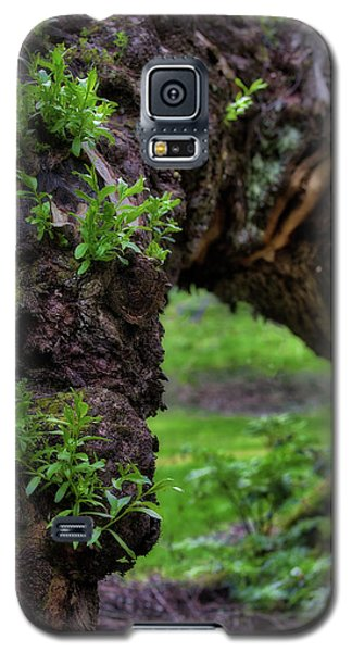 Hobbit Tree Galaxy S5 Case
