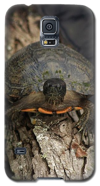Holding On Galaxy S5 Case by Kim Henderson
