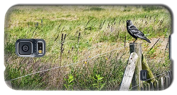 Holland Dunes - Jackdaw On A Post Galaxy S5 Case