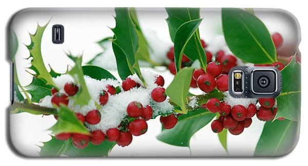 Galaxy S5 Case featuring the photograph Holly Berries On White by Sharon Talson