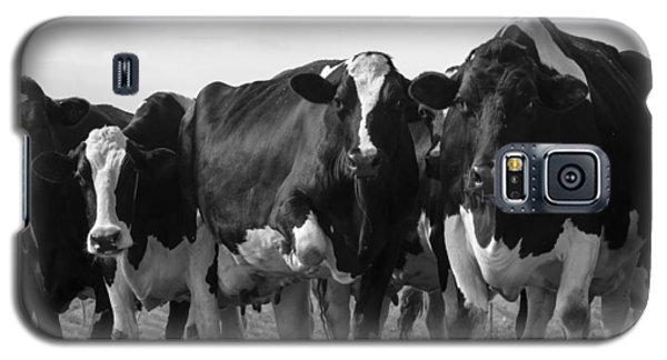 Curious Holsteins Galaxy S5 Case