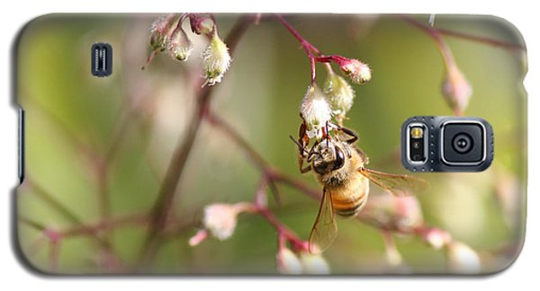 Honey Acrobat Galaxy S5 Case