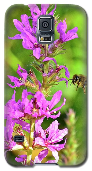 Honey Bee In Flight Galaxy S5 Case