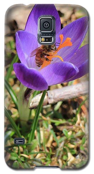Honey Bee On Crocus  Galaxy S5 Case