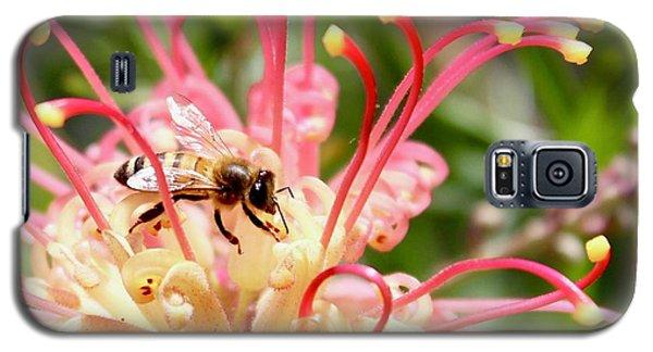 Honey Bee On Grevillea  Galaxy S5 Case