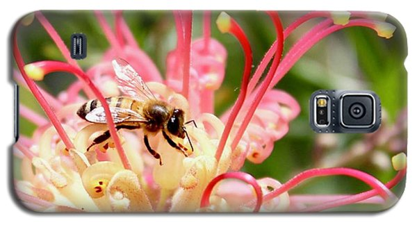 Honey Bee On Grevillea  Galaxy S5 Case