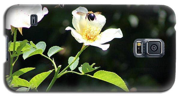 Honey Bees In Flight Over White Rose Galaxy S5 Case