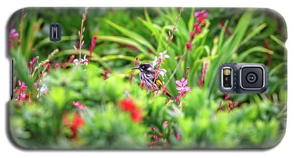 Galaxy S5 Case featuring the photograph Honey Eater, Bushy Lakes by Dave Catley