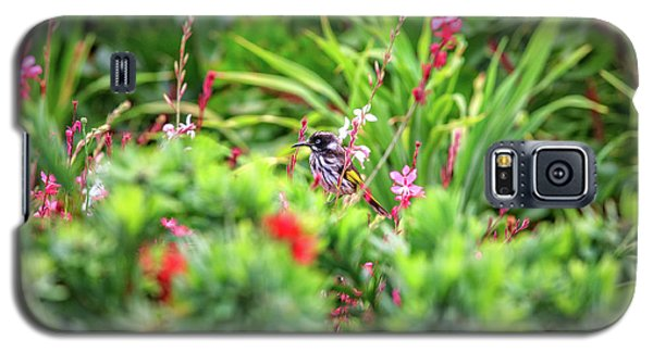 Honey Eater, Bushy Lakes Galaxy S5 Case by Dave Catley