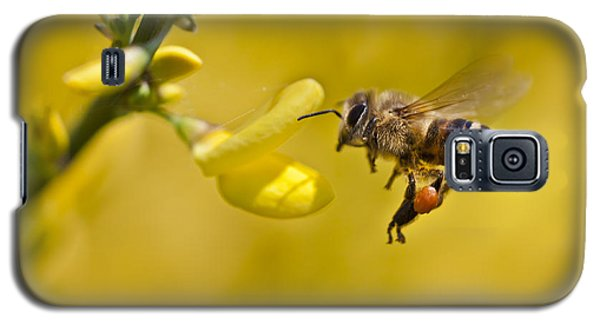 Honeybee Apis Mellifera Galaxy S5 Case