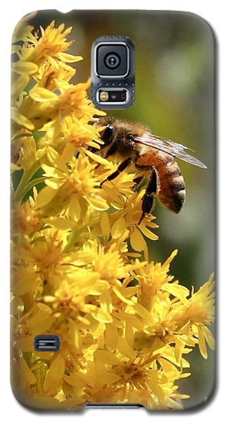 Honeybee On Showy Goldenrod Galaxy S5 Case