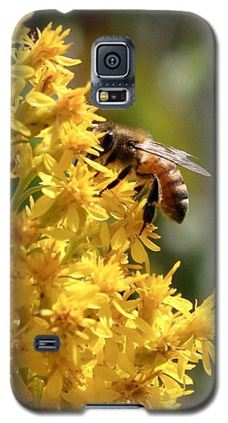 Honeybee On Showy Goldenrod Galaxy S5 Case