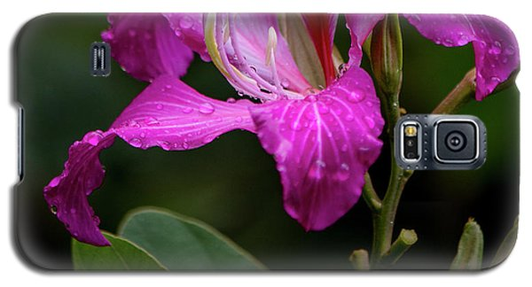 Hong Kong Orchid Galaxy S5 Case