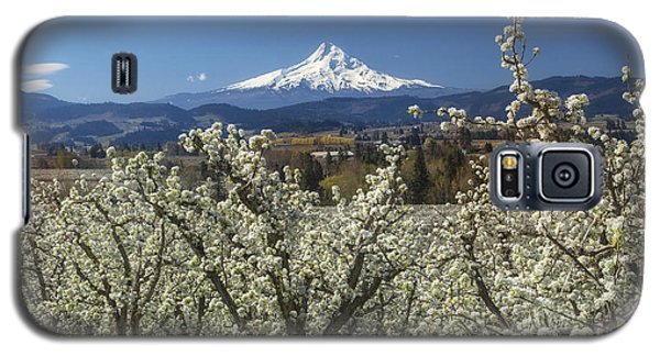 Hood River Valley In Bloom Galaxy S5 Case
