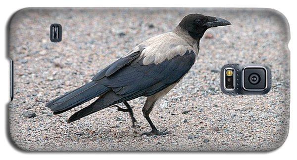 Galaxy S5 Case featuring the photograph Hooded Crow by Jouko Lehto