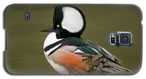 Hooded Merganser Galaxy S5 Case