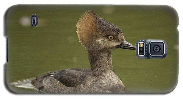 Hooded Merganser Galaxy S5 Case by Doug Herr