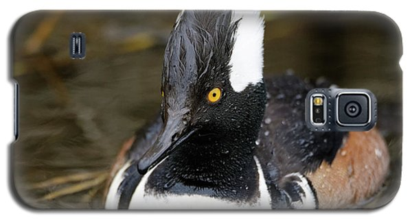 Hooded Merganser Hanging Out Galaxy S5 Case