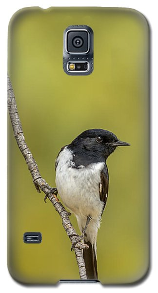 Hooded Robin Galaxy S5 Case