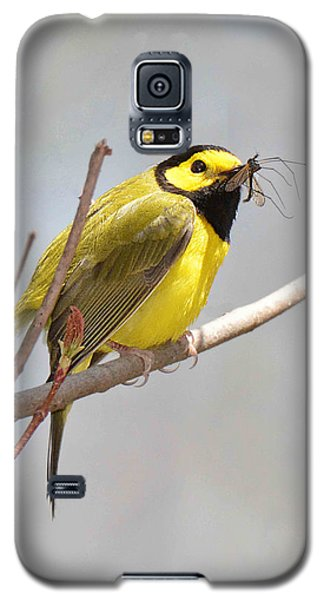 Hooded Warbler With Bug Galaxy S5 Case by Alan Lenk