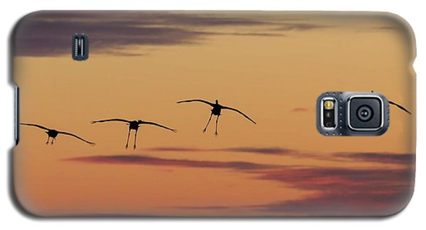 Horicon Marsh Cranes #4 Galaxy S5 Case